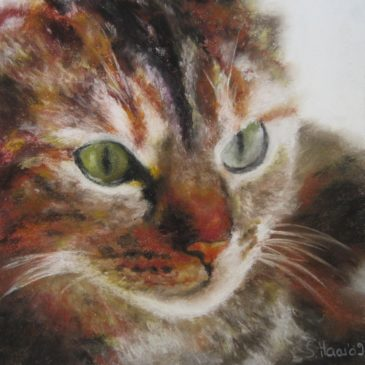 Katzen I_klein